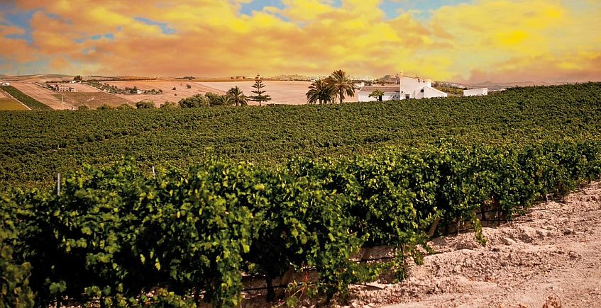Nueva edición de los planes virtuales con vino en González Byass