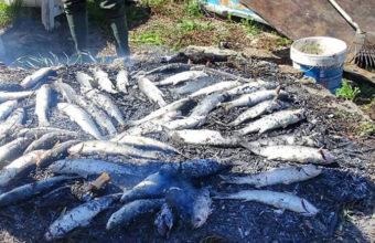 Despesque en el Molino de Pesca de Chiclana