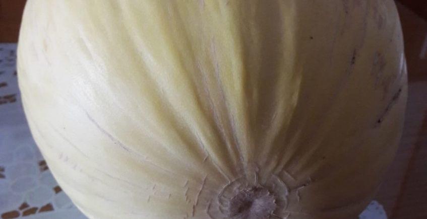 melon portada