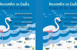 Noviembre, mes de los esteros en Chiclana, El Puerto, Puerto Real, San Fernando y Trebujena
